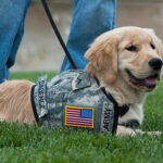 Service Dogs Helping Disabled Veterans by Providing a Better Quality of Life