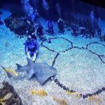 LifeWaters provides adaptive scuba programs